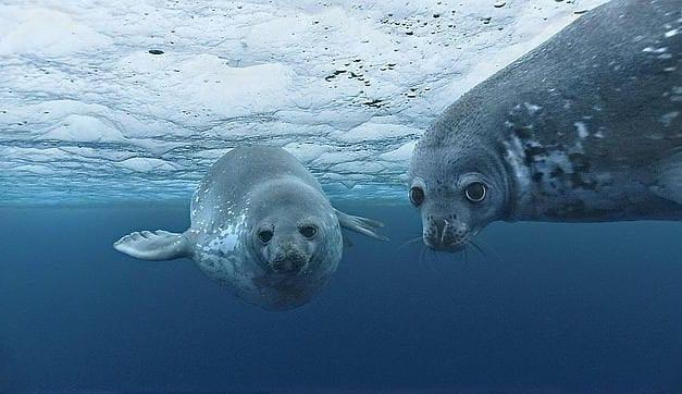 Los océanos son amortiguadores naturales de la tierra pero ahora están absorbiendo el 93% del calor de la atmósfera
