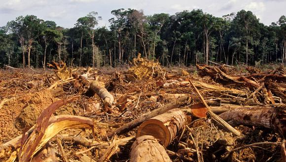 Bolsonaro y su ministro Salles están deforestando Brasil ilegalmente – Juicios y Allanamientos