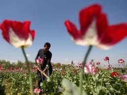 Así se han enriquecido los talibanes con el narcotráfico
